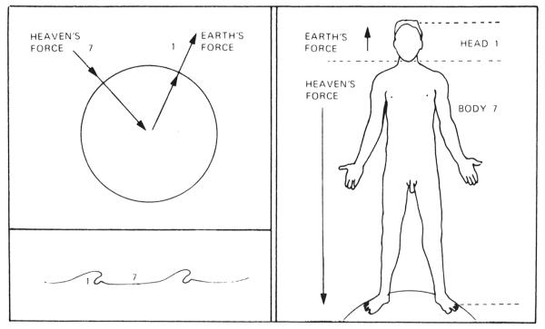 7-to-1-ratio-human-form
